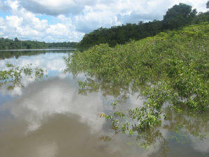 CAMU-CAMU, Rodal natural inundado zona rio Tigre