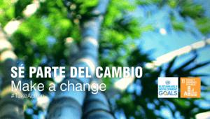 cambio bamboo