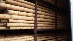 guadua-bambu export