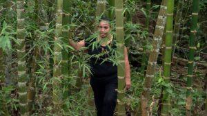 plantation de bamboo colombie